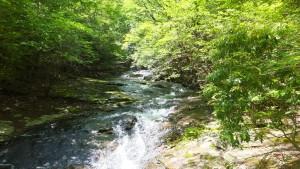 森林浴へGo!(るり渓)