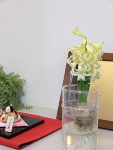 ペットボトルを利用したヒヤシンスの水栽培